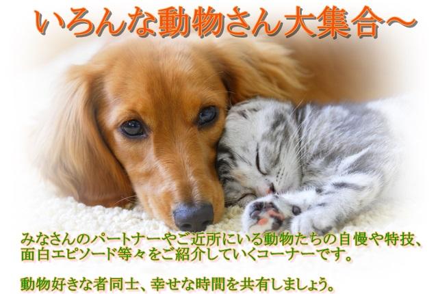 動物、大集合