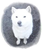 はるちゃん、北海道犬