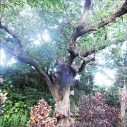 大あかぎ、沖縄