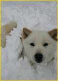 雪、はるちゃん